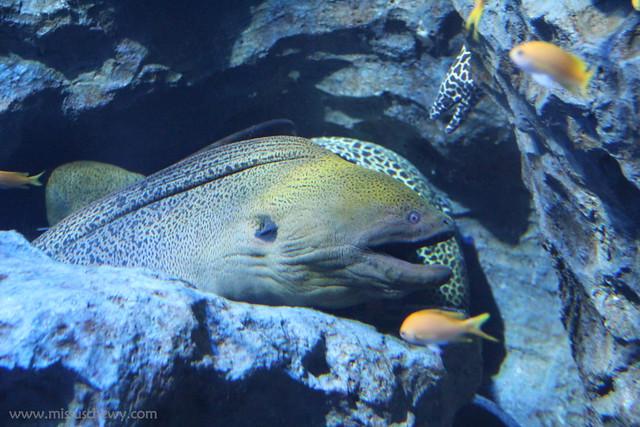 RWS S.E.A Aquarium 663