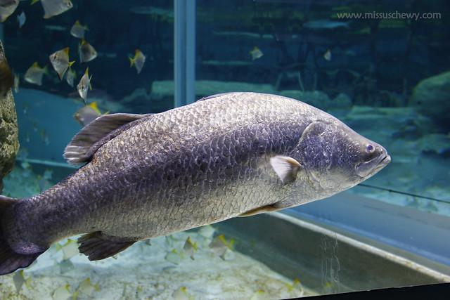 RWS S.E.A Aquarium 522