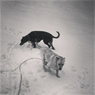 Lola & Zeus checking out the fresh snow (still falling)