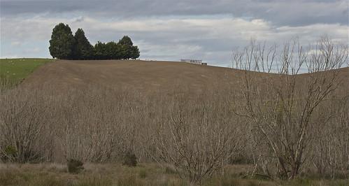 newzealand sky cloud tree rural canon landscape willow valley pastoral berwick wetland