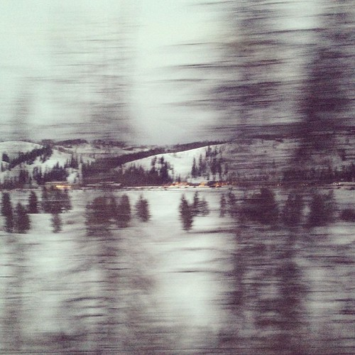 Blurry trees #winterpark #traintrip