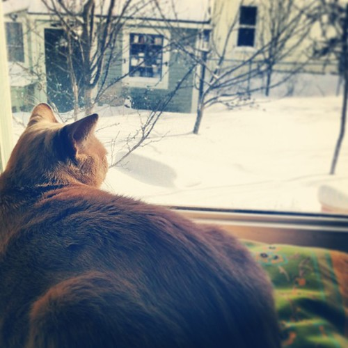 Max enjoys looking at the snow #cat