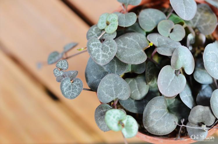 2012多肉植物13.jpg