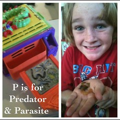 Letter of the week is Pp -Marcy @benandmeblog -we be makin bugs! Parasites & Predators #homeschool