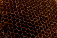 honeycomb, macro photography, close-up,