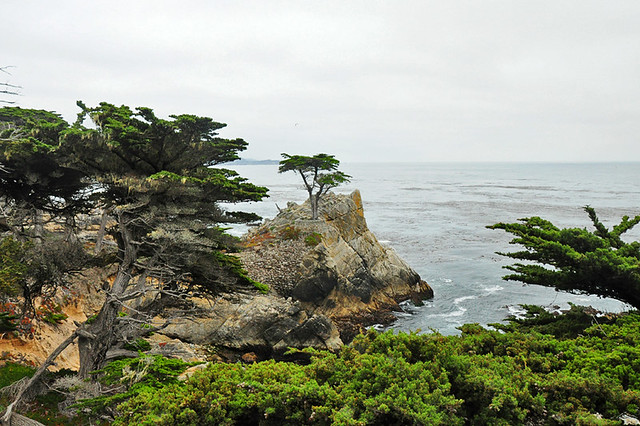 The Not So Lone Cypress, Pebble Beach, California
