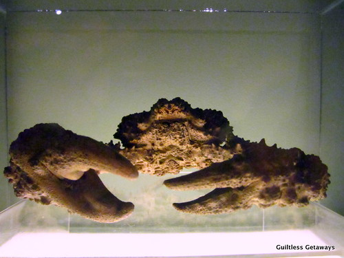 stone-crab.jpg