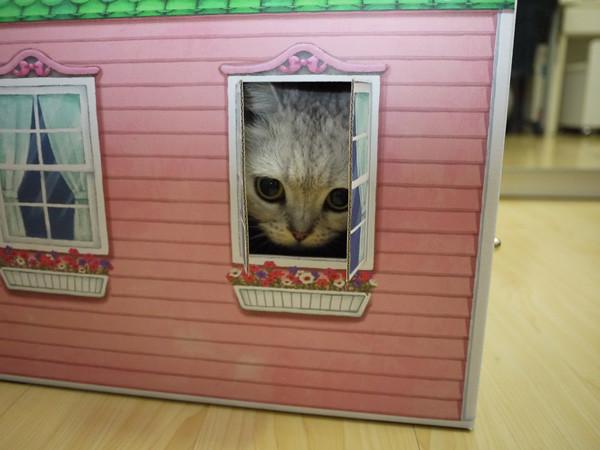 7QQ:有窗戶耶!可以隨時觀看外面的動靜!
