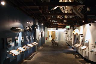 Húsavík Whale Museum