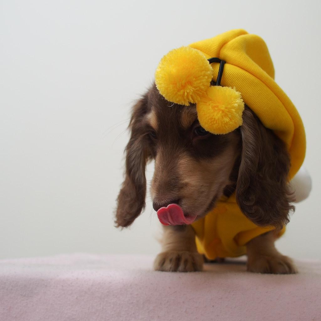 *嗡嗡小蜜蜂|哇喜BuBu!!