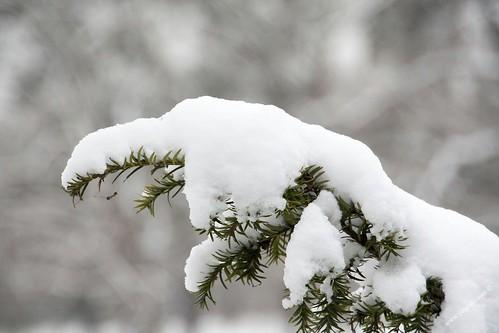 branche sous la neige