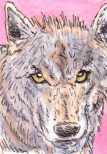 Wolf by stephro