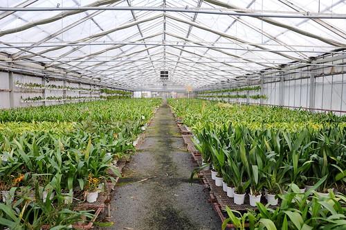 Greenhouses 01