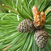 Pine cone art by JSB PHOTOGRAPHS