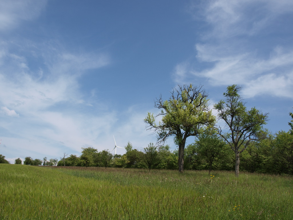 Landschaft zwischen Berus und Berviller