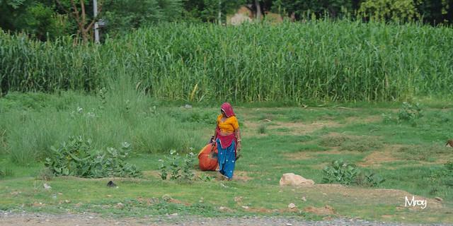 pentax jaipur 844