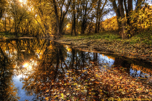 autumn usa tree water forest sunrise reflections river landscape virginia nikon fallcolor fallcolors potomacriver loudouncounty tomlussier