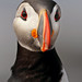 Puffin by Rob & Amy Lavoie