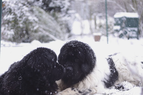 Tara and Usko and snow -Explore-