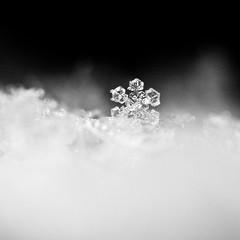 [フリー画像素材] バックグラウンド, 雪の結晶 ID:201301220000