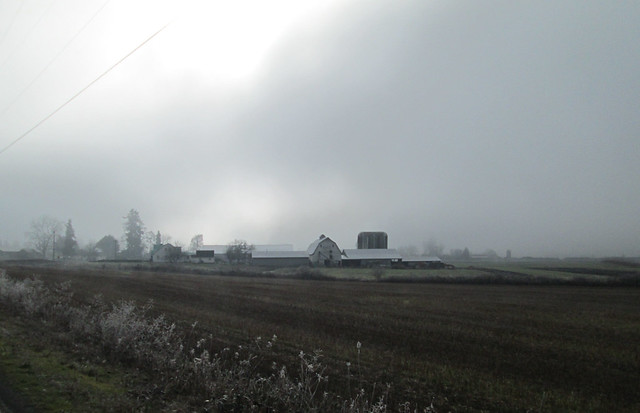 Foggy farm complex