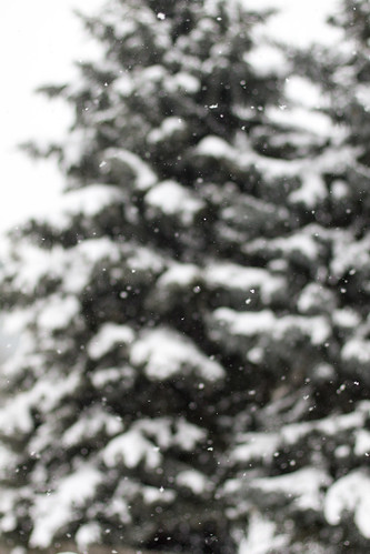 snow-2831