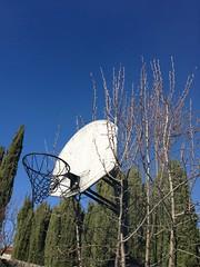 Fruit Basketball