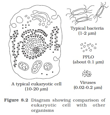 NCERT Class XI Biology: Chapter 8 - The Unit Of Life ...