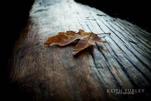 Leaf on Wood