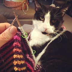Cooler weather in the morning for a cat in the lap. #shadowknitting