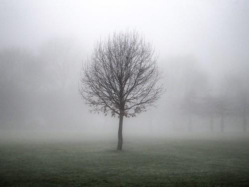 [フリー画像素材] 自然風景, 樹木, 霧・霞, 風景 - イギリス ID:201301130600