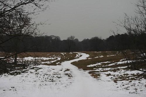 dreary field