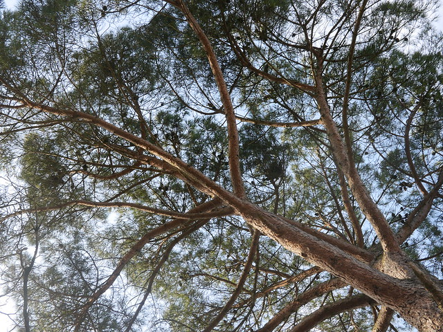 Les arbres pas loin de là, par Fcp