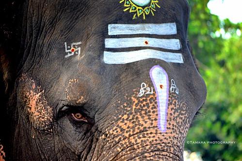 street india elephant animal temple nikon wildlife hindu pondicherry southindia indiatravel puducherry nikond5100