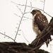 Fordham Hawks - 2013
