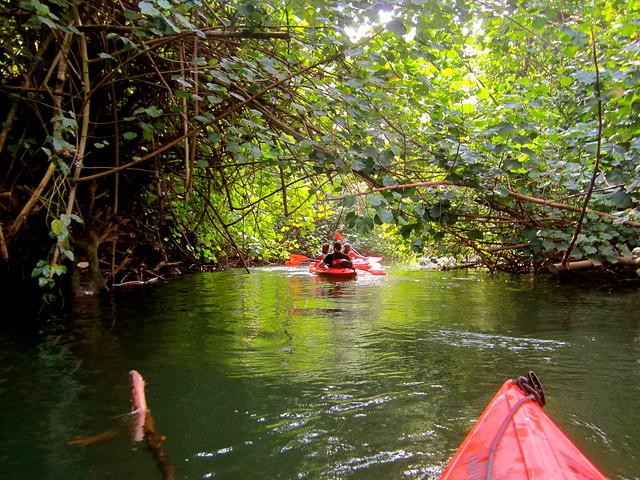 A Day on the Wailua River with Kayak Kauai