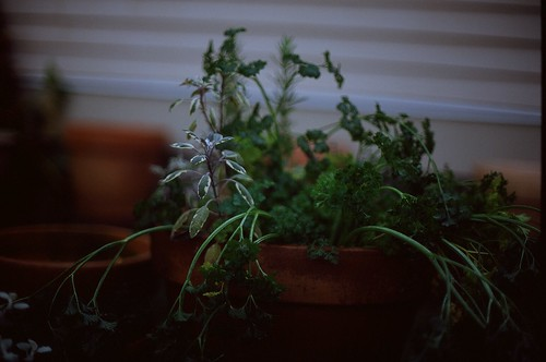 herbs in pot winter