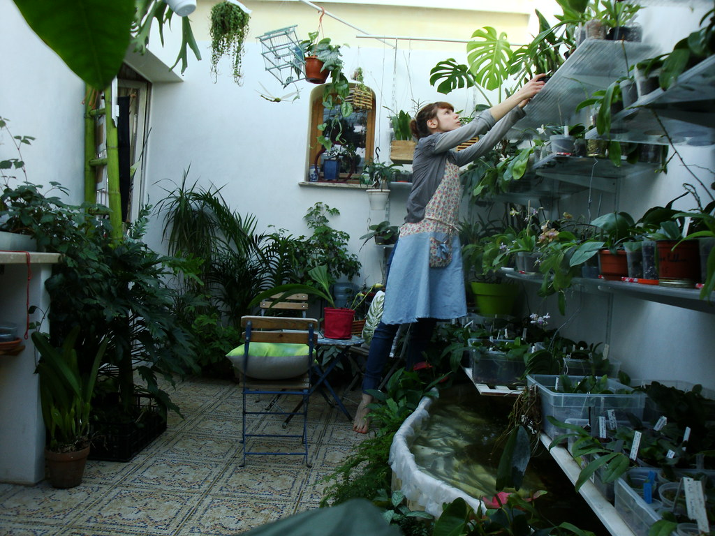 Dans mon Jardin d'Hiver 8430487298_3a6a1edd91_b