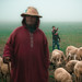 Shepherds by TGKW
