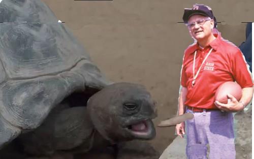 woody_turtle