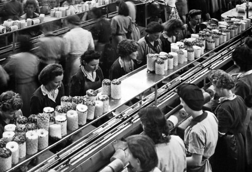 Female workers at the Queensland Tropical Fruit Produce Cannery, Northgate, 6 March 1948