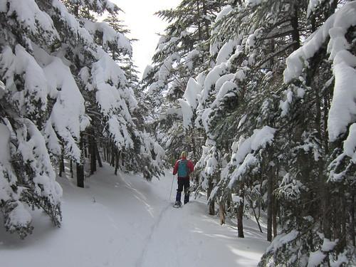 シラビソの森を歩く 2013年2月14日10:09 by Poran111