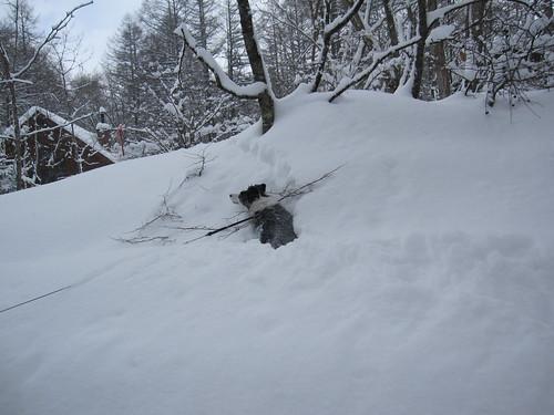 雪の中を泳ランディ by Poran111
