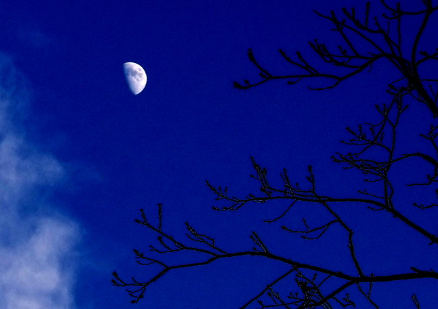 Moon over Prospect Park at twilight