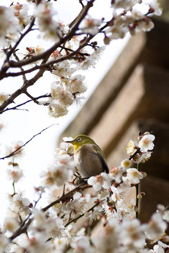 bird and ume