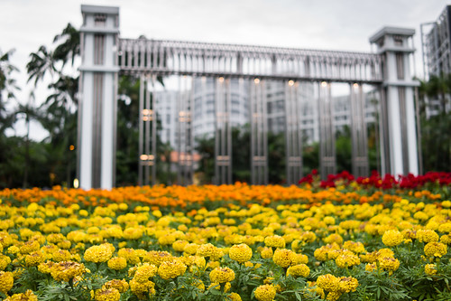 A field of flowers, Istana Park, Singapore