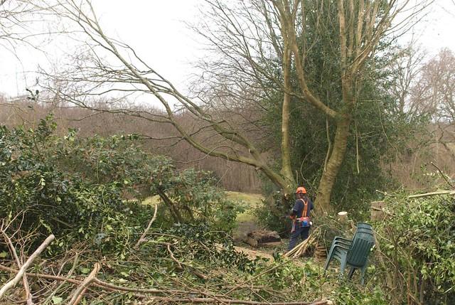 DSC_5727 tree felling