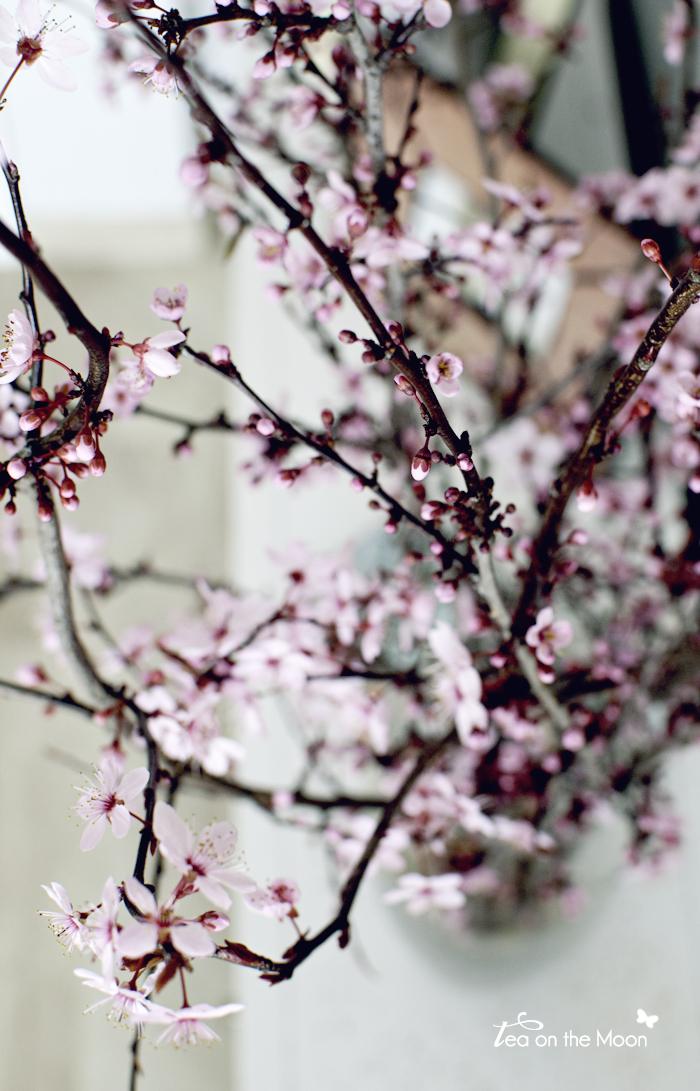 prunus con flor 03