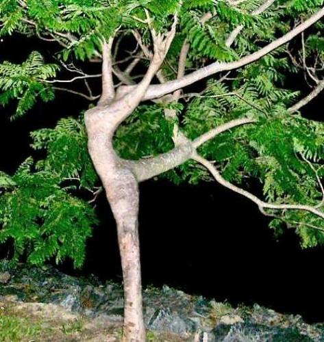 weird_trees24