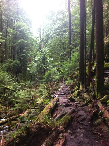 Rain forest between Eagle Harbour and Whyte Lake